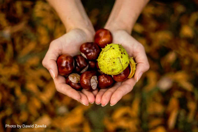 chestnuts - Treat Varicose Veins the Natural Way